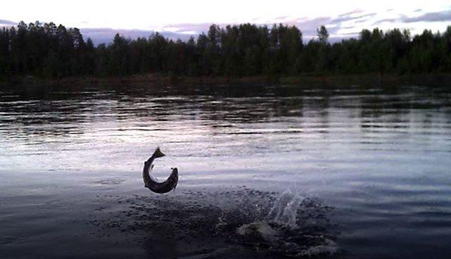Eemelivaaput, mika sinulle on olennaista kalastuksessa